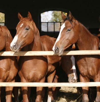 30842099 - nice thoroughbred horses in the stable