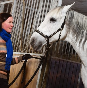 18203198 - woman and white horse inside a stall, horizon format